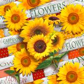 Bild: PAPSTAR Servietten Sunflower Field