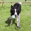 Bild: BeCo Pets Hundeball BeCo Ball mit Seil grün