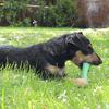Bild: BeCo Pets Hundespielzeug BeCo Bone groß grün