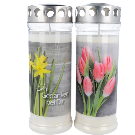 Hofer Premium 7 Tage Motivlicht Narzisse & Tulpen