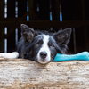 Bild: BeCo Pets Hundespielzeug BeCo Bone blau
