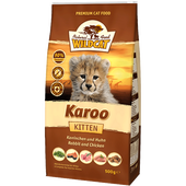 Bild: Wildcat Karoo Kitten