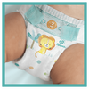 Bild: Pampers Baby Dry Gr.7 Extra Large 15+kg MonatsBox