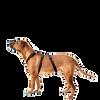 Bild: WOLTERS Cat & Dog Professional Geschirr Schwarz M