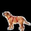 Bild: WOLTERS Cat & Dog Professional Geschirr Rot L