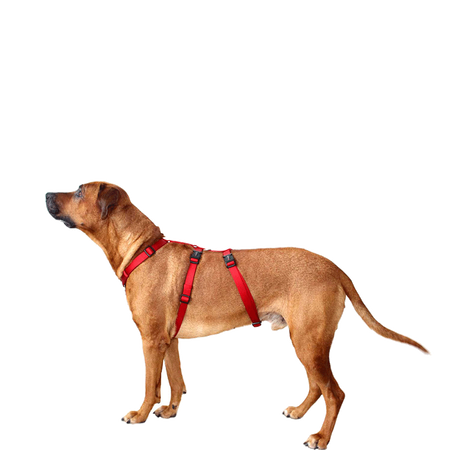 WOLTERS Cat & Dog Professional Geschirr Rot L