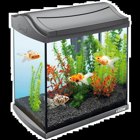 Tetra AquaArt Aquarium Komplettset Anthrazit 30L