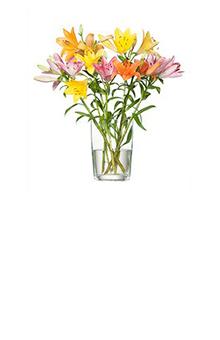 Leda Blumenstrauß