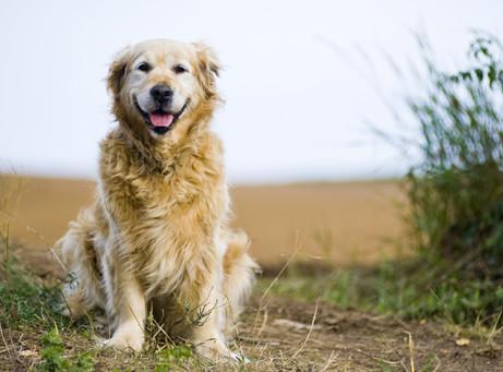 BIPA Hundeartikel