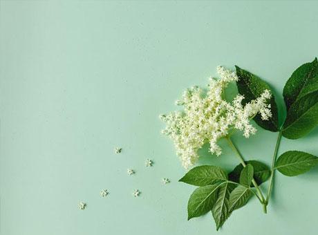 Immunbooster: Holunderblüten-Shot