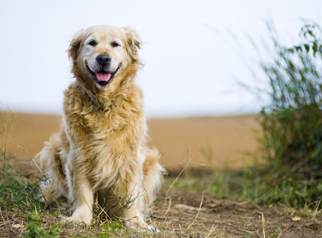 BIPA Hundesortiment