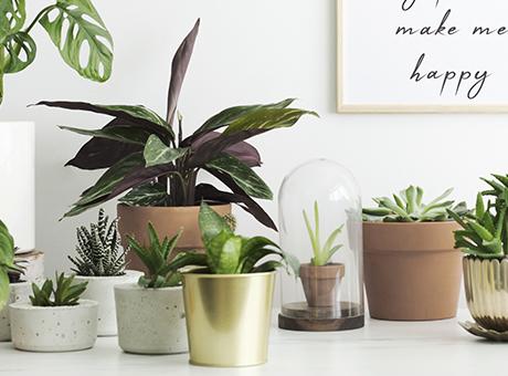 Pflanzenschutzmittel & Insektenschutzmittel online bestellen