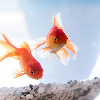 Fischfutter, Fischzubehör, Aquariumzubehör BIPA