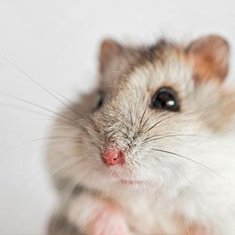 Kleintier, Hamster, Mäuse, Meerschweinchen Futter und Co. bei BIPA