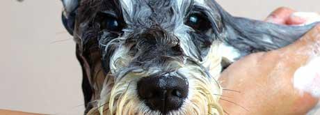 Fellpflege für Haustiere