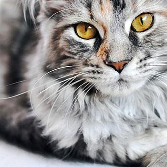 Katzenartikel BIPA