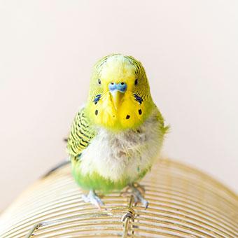 Vogelfutter, Vogelzubehör BIPA