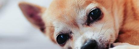 Wellness-Programm für Hunde